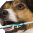 Pet teeth health