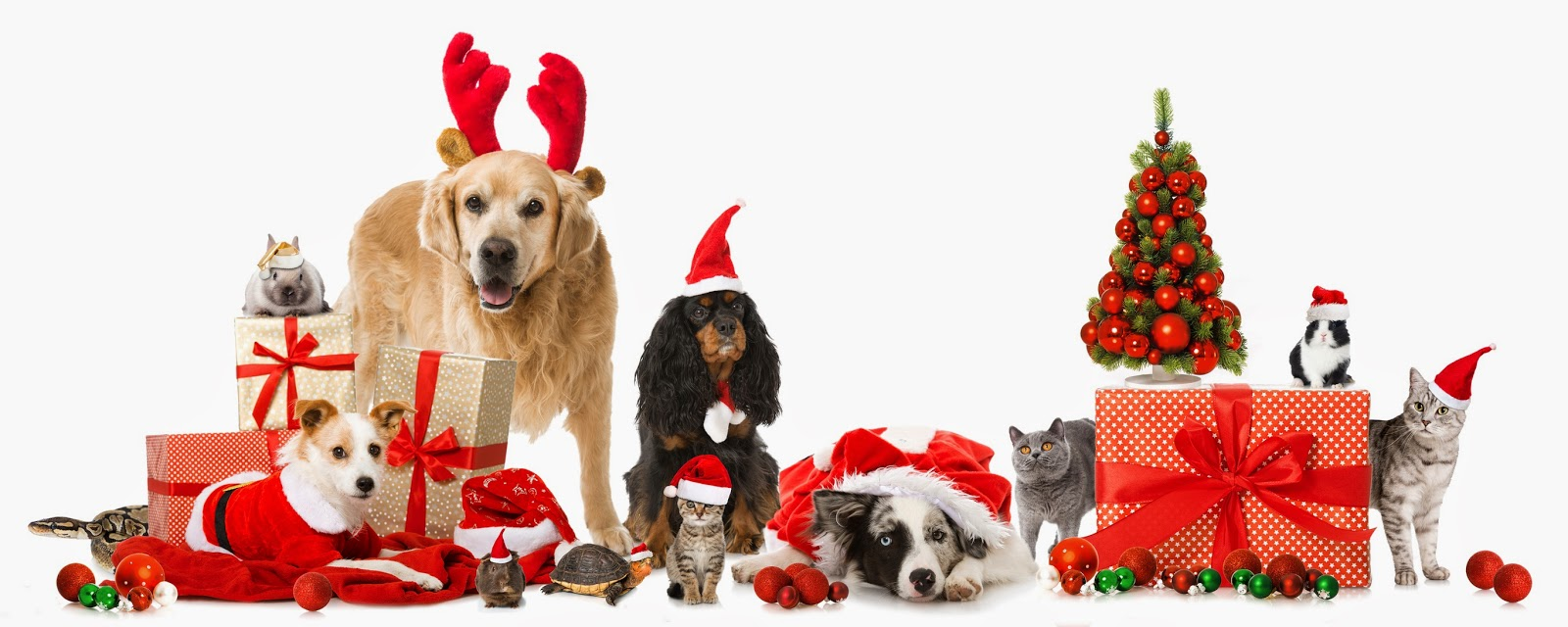 The vet s christmas pet gifts