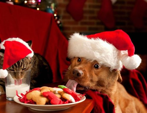 Christmas at Meridian Vets
